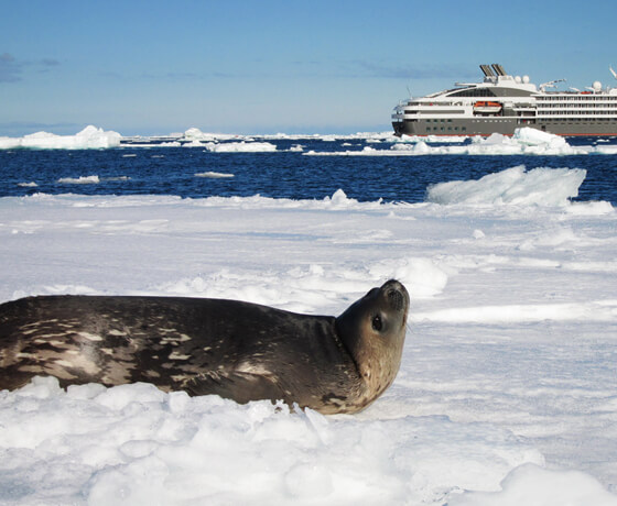 Gay Antarctica Cruise Tour